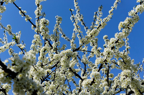 2010-03-27_1029_2_D700