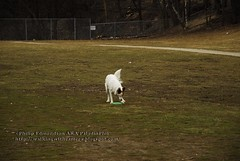 Playing With Frisbee