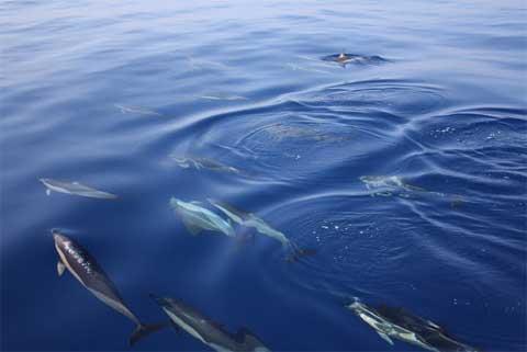 Avistamiento de cetáceos en Mazarrón (Murcia)