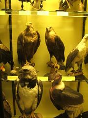 DSCF3550 (Phil D-UK) Tags: animals tring naturalhistorymuseum rothschild