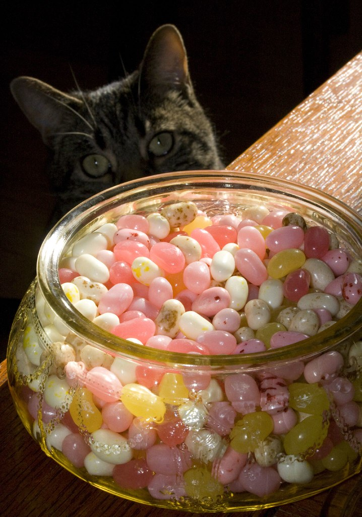 Percival with Jellybeans and Great-Grandma's Candy Dish