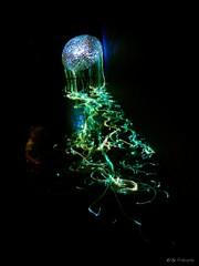 Electrifying Jellyfish (Gudigraphy) Tags: light licht jellyfish darkness crystal sparkling dunkel dunkelheit goldenegg qualle kristalle svarowski flickrsbest glasfaser beautifulcapture anythingtodowithwater
