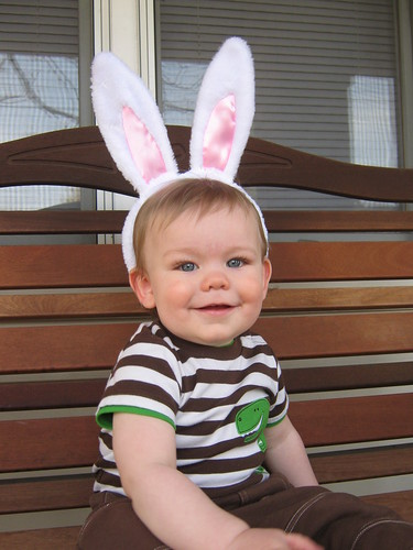 brody the bunny