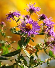 Wild flowers along the bay (bilbo3711) Tags: wisconsin wildflowers gmt sturgeonbay