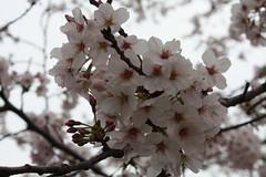 神奈川県議会議員森正明公式ウェブサイトへ