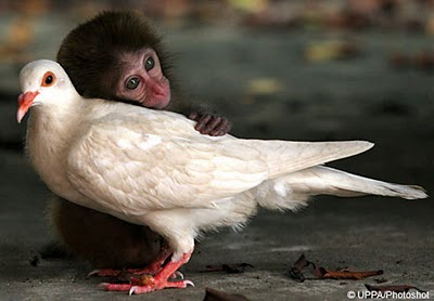 monkey pigeon