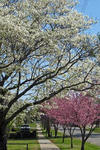 Spring In Mena 27
