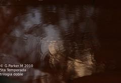 trilogia acuatica parte 3 (Mex::::::Gabriel:::Parker::::::Arg. 2016 images) Tags: naturaleza agua reflejos naturalshots despuesdelalluvia trilogias