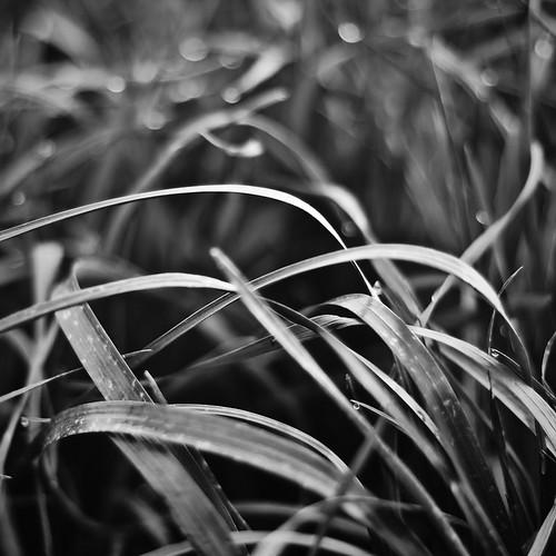 Am nächsten Acker wuchs ein wenig Gras, das noch vom Morgentau bedeckt war.