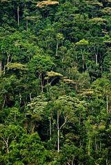 Rainforest (Mostly Tim) Tags: africa woods rainforest uganda worldphotos mostlytim
