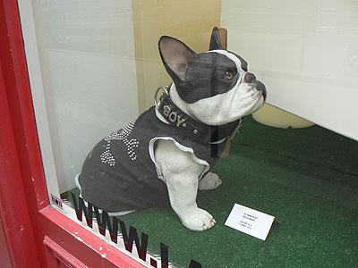 chien 1.jpg