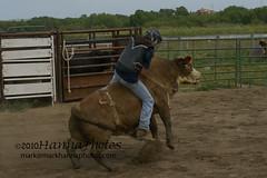 100418-7672 (photoelectronics101) Tags: california del hanna mark bull salinas bullfighter paso rodeo bullriding rancho robles bullrider 100418 hannaphotos april182010