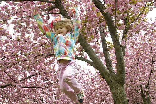 CherryBlossom_9.jpg