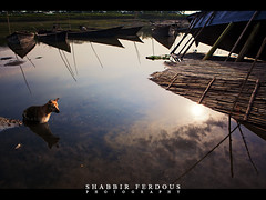 Unspoken Symphony (Shabbir Ferdous) Tags: morning blue light sky cloud dog color colour reflection sunrise work river landscape photographer shot tone bangladesh bangladeshi brahmaputra travelshot mymensing canoneos5dmarkii shabbirferdous ef2470mm28lusm wwwshabbirferdouscom shabbirferdouscom