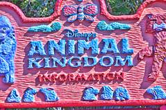 Disney's Animal Kingdom (thejeffreywscott) Tags: colors contrast orlando disney hdr animalkingdom pinkandblue floridapark floridaattraction orlandopark