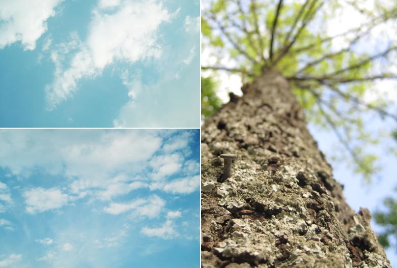 tree composite
