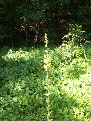 100502-yellowflowers5-ok