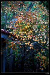 nEO_IMG_IMG_1653 (c0466art) Tags: nov trip travel autumn trees light sunset sky mountain flower leave grass clouds creek canon landscape photo scenery colorful view farm taiwan 5d shooting middle 2009  famouse c0466art