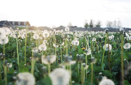 field_of_weeds