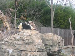 IMG_0907 (superdubey) Tags: zoo dc washington national dc08