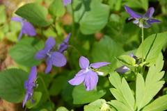 Rogw (x-oph) Tags: spring poland polska arboretum polen frhling wiosna sggw rogw