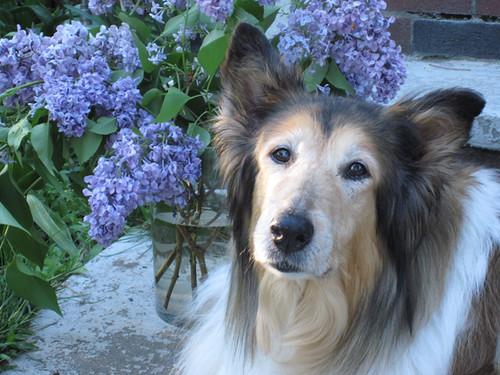 Lilac Sasha