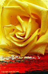 Abstract Rose (MY PINK SOAPBOX) Tags: naturaleza abstract flores flower nature floral fleur rose yellow collage jaune poster nikon colorful mixedmedia flor vivid rosa natura colores canvas giallo fiori rosette afiche affiche fineartphotography roseto mediamixta mypinksoapbox anahidecanio artyzenstudios