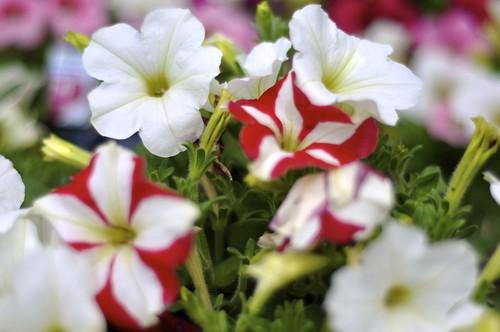 Bounty of springtime