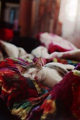 2010-04004 (miauwhite) Tags: jupiter9 f285mm
