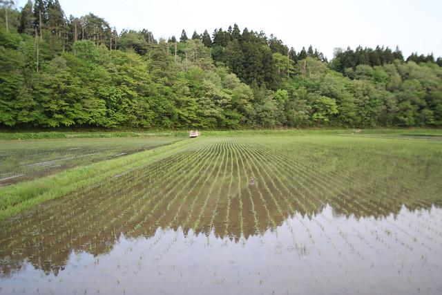 100523_taue_akita