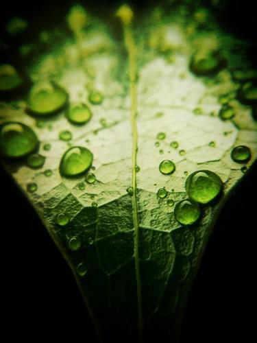 Green with rain