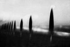 Cypress beach (Effe.Effe) Tags: sea bw italy sun mer blur praia monochrome strand mar mare grain bn ombrelloni plage spiaggia marche senigallia plaja mosso grana sfocato beachumbrellas