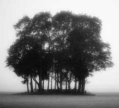 Mist And Trees (M Zappano) Tags: morning trees blackandwhite mist black tree cemetery misty canon dawn early delaware laurel delmarva earlymorningmist canon50d