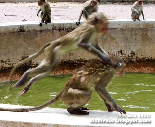 monkey leapfrog
