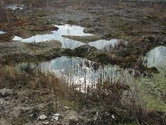 Ontdekkingstocht Reitdiep (Platform GRAS) Tags: groningen reitdiep platformgras lefier