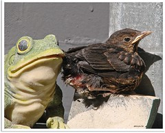 Gestatten: Nestflüchter Günni - allow me to introduce myself: precocial  bird Günni