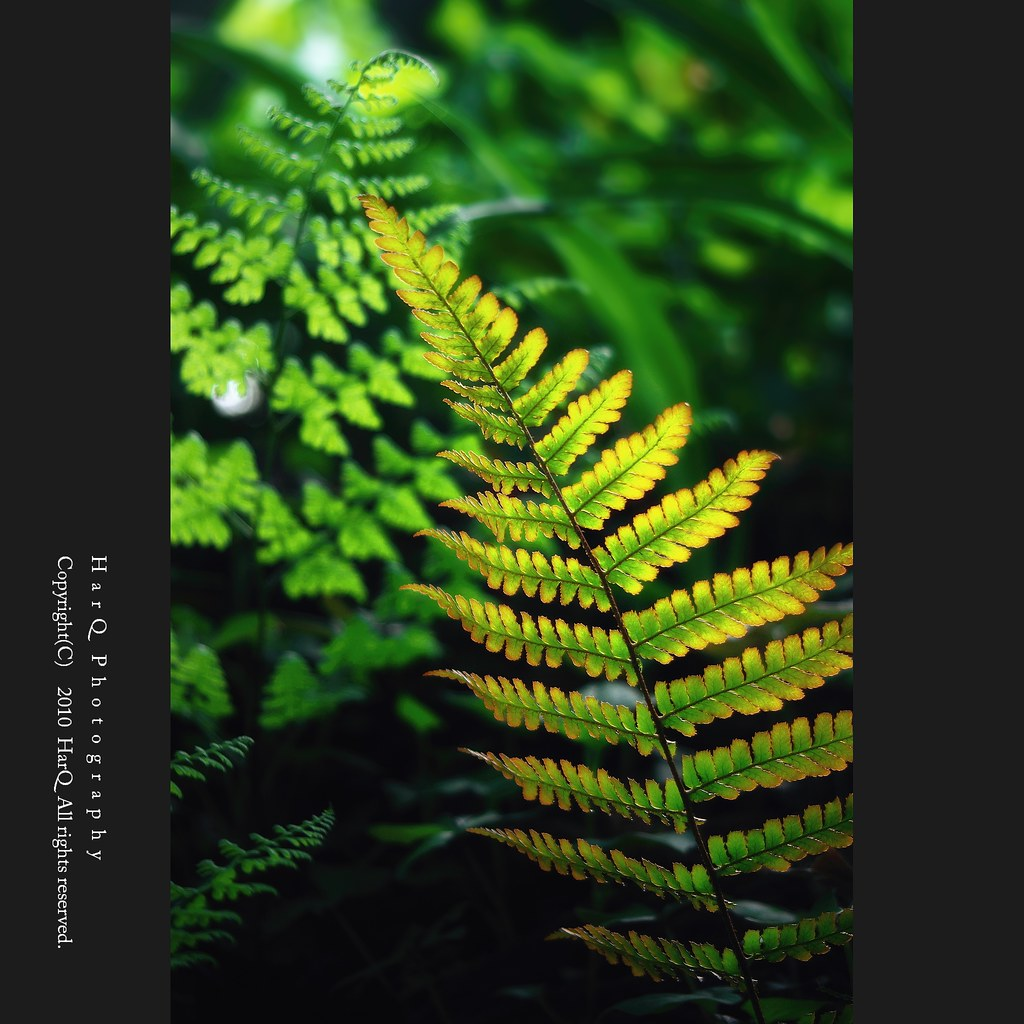 Shining Fernery *