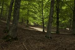 Camposecco_MG_8553 (candido33) Tags: roma alberi natura lazio appennino bosco doline faggi montisimbruini carsismo cameratanuova camposecco parconaturaledeimontisimbruini faggete altopianodicamposecco