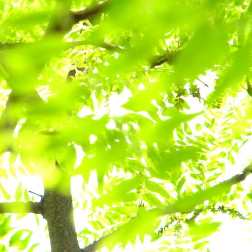 green {1}