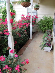 porch view late spring