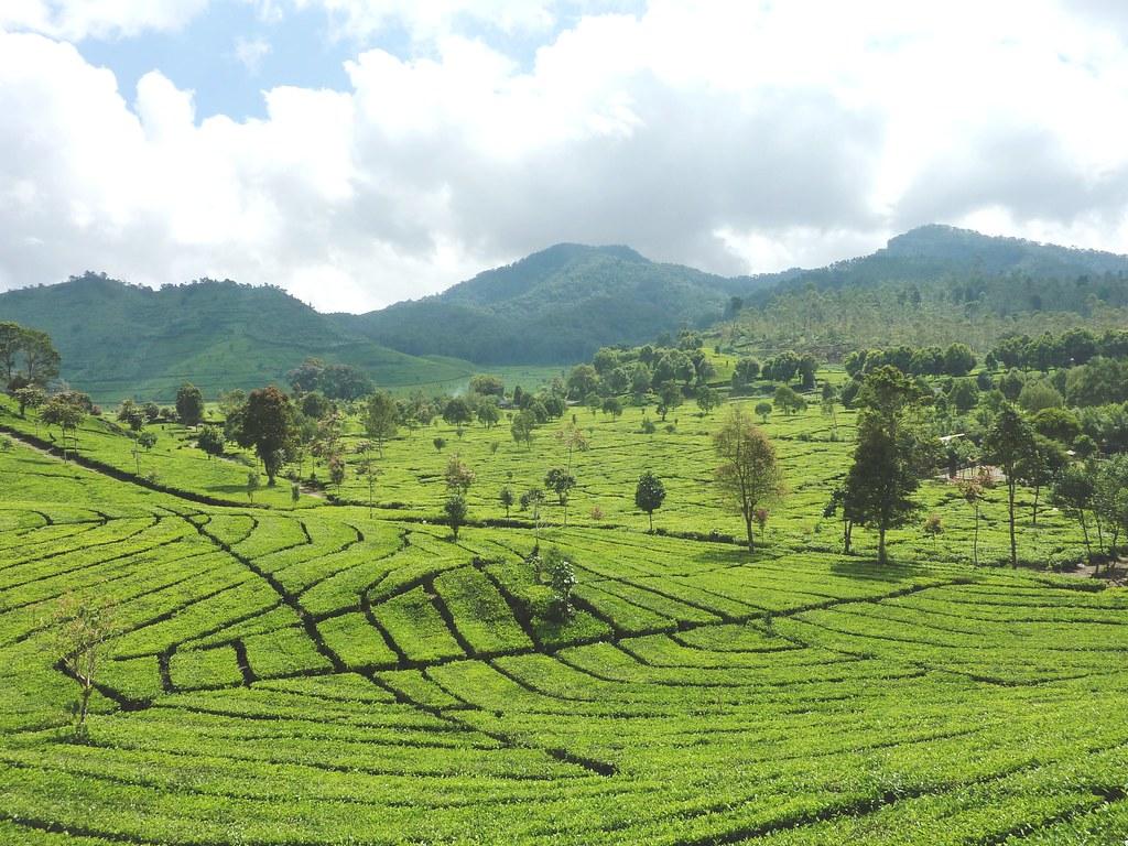 Java-Bandung-Region (57)