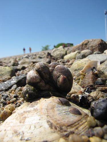 shells cuddling