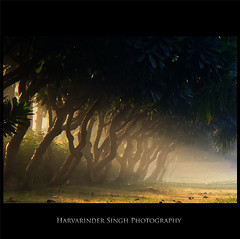 P.A.U - A Photographer's Heaven (Harvarinder Singh) Tags: morning trees sun sunlight india mist green leaves fog heaven sony rays punjab pau ludhiana iwanttobethere feelsgood sonyh7 punjabagriculturaluniversity harvarindersinghphotography harvarindersingh beautifulludhiana pauludhiana