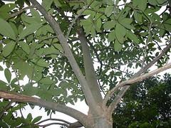 Phoenix Life Herb Garden 18 (drs2biz) Tags: orchard hainan jackfruit caiquncounty phoenixlifeherbgarden meilandistrict