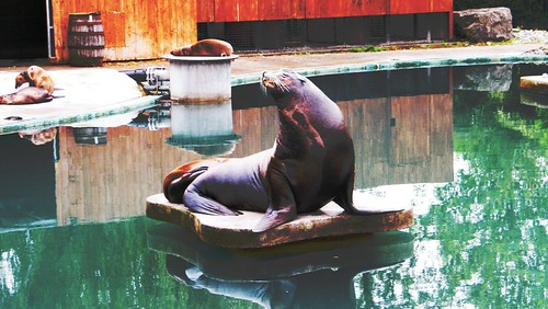 Sea Lion in Dublin Zoo