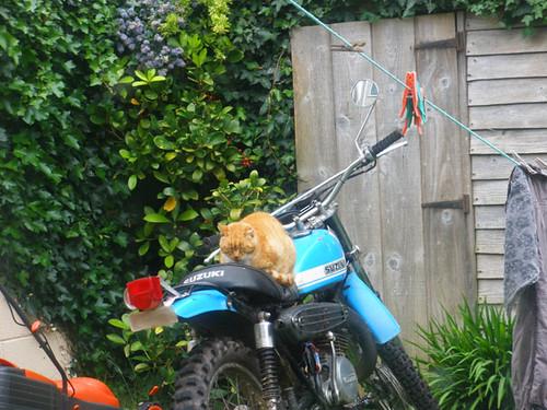 Ginga on the bike