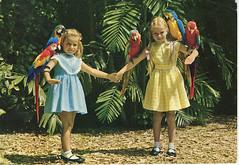 Parrot Jungle - Miami (1968)