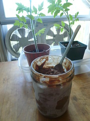 Ice cream and tomato plants