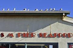 Seafood Connoisseurs (AntyDiluvian) Tags: california seagulls beach pier losangeles santamonica gulls line socal seafood southerncalifornia santamonicapier santamonicabeach 5photosaday santamonicastatebeach connoisseurs smseafood