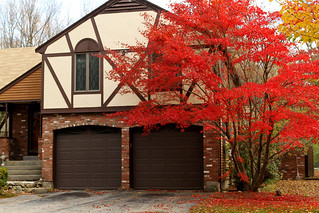 House with Red Tree